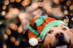 Dog Safe Holiday Foods: The Naughty & Nice Lists   Pretty Fluffy #dog #holiday #christmas PHOTO CREDIT: Jessica Trinh Photography