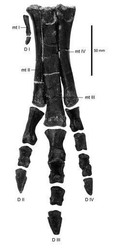 """Manuelino"" o pequeno dinossauro que viveu no tempo dos gigantes"
