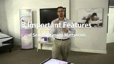 Sealy Optimum Elation Gold Mattress Information | Bedplanet | Bed Planet | Bedplanet.com