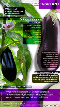 Eggplant benefits. Infographic. Summary of the general characteristics of the Eggplant. Medicinal properties, benefits and uses more common of Eggplant. http://www.medicinalplants-pharmacognosy.com/herbs-medicinal-plants/eggplant/benefits-infographic/