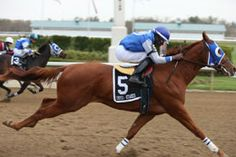 Eyesa Speedy Simon(2012)Its All About Speed- Eyesa Player By Eyesa Special. 4x4x4 To Special Effort, 4x4x5 To Dash For Cash, 4x5x5x5 To Raise Your Glass(TB). Winning Ontario Sires Stakes Futurity On October 13, 2014 At Ajax Downs