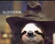 "ahahahahahahaha! They should totally let sloths go to Hogwarts. @Amanda Snelson Snelson Boone ""The 25 Greatest Sloths The Internet Has Ever Seen"""