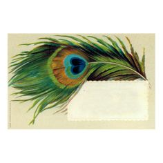 Name Cards — John Derian Company Inc Peacock Feather Tattoo, Peacock Feathers, Dragon Koi Tattoo Design, Watercolor Peacock, Feather Cards, Owl, Pheasant Feathers, Name Cards, Tattoo Designs