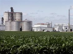 Biofuels: Is it the Solution to our Energy Needs?