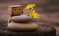 Danbo Nature Pebbles Creative Up Net #nature #photography #wallpapers