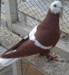 En Güzel Güvercin Resimleri