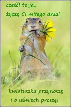 a squirrel and a flower! Groundhog Pictures, Animals Beautiful, Cute Animals, Funny Animals, Le Castor, Happy Squirrel, Hamster, Animal 2, Cute Little Baby