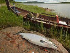 Lohikantojen hoidon ja kalastuksen säätelyn perustaksi tarvitaan tietoa jokiin kudulle …