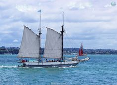 Sailing.        Auckland Anniversary Day Regatta & Tugboat Race 2016. Part IV ... 17  PHOTOS        ... Auckland's 176th birthday celebrate with activities and entertainment for all ages        Read original article:         http://softfern.com/NewsDtls.aspx?id=1069&catgry=7