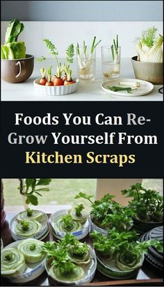 How to Re-Grow Celery, Bok Choi, Romaine Lettuce Cabbage from Kitchen Scraps Growing Cabbage, Growing Onions, Growing Lettuce, Grow Lettuce Indoors, Growing Vegetables In Pots, Regrow Vegetables, Planting Vegetables, Indoor Vegetable Gardening, Home Vegetable Garden