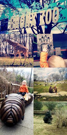 #mystrangefamily #bronx #zoo fun Strange Family, Wildlife Conservation Society, Bronx Zoo, Spring Break, New York City, Activities For Kids, Stuff To Do, Nyc, Canada