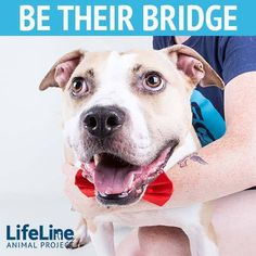 We are looking for volunteers to help us get some of our 'long-timers' out of the shelter for good! Since these dogs are around many dogs at the shelter, we would like to find them a foster home where they could be the only dog while they decompress and adjust to living in a family home.