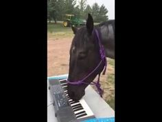 Musical Horse Taps Out a Surprisingly Respectable Tune on an Electric Keyboard Using Her Mouth