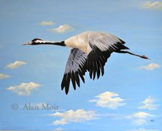 Alan Moir. Crane - acrylic on canvas www.facebook.com/alan.moir.portraits