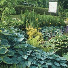 Hostas 101 - Southern Living. So many colors, so many kinds, so many choices. These shade-loving perennials rule. Steve Bender