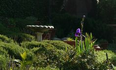 Our yard in Ojai