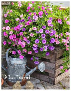 Fill old crates for garden interest