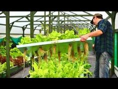 Aquaponics System - $75 - How We Easily Build Aquaponics Garden - YouTube