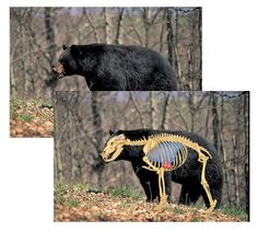 Black Bear Hunting Targets.