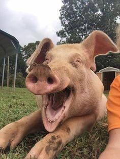 Happy Horton