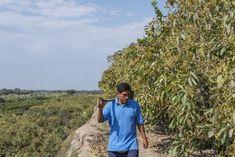 Carlos Valderrama, Harvest Market, Fair Trade Chocolate, Farmer, Specialty Foods, Farmers