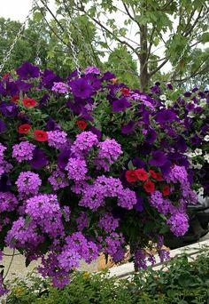 Purple flower hanging basket