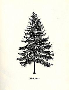 spruce tattoo artists - Google Search
