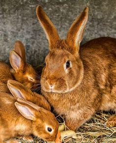 Beautiful bunny family:)