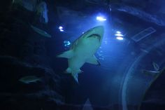 Shark! A view to get the adrenaline going at Deep Sea World, North Queensferry