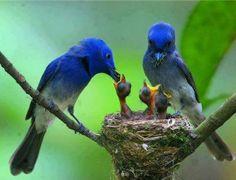 feeding the brood