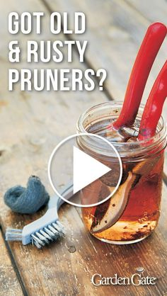 Don't throw out old pruners - see how you can clean them up! Have your pruners lost their edge? Are they rusty and stiff? We'll show you how to clean and sharpen old pruners so they look and perform like new again! Gardening For Beginners, Gardening Tips, Gardening Gloves, Gardening Services, Garden Gates, Garden Bed, Garden Wagon, Big Garden, Organic Vegetables