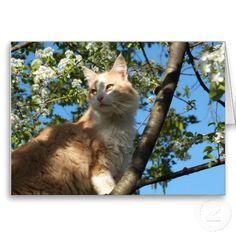 Sahara Cat In A Tree
