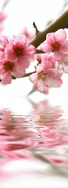 May Flowers, Pretty Flowers, Romantic Table Setting, Beauty Salon Decor, Flower Boutique, Moon Pictures, Pink Themes, Everything Pink, Pink Love