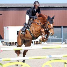 La plus grande victoire, c'est la victoire sur soi» Platon #horses #showjumping #workhar Horses, Instagram, Animals, Horse, Equestrian, Animales, Animaux, Animal, Animais