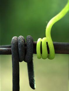 Wire And Vines by Danamaris.deviantart.com on @DeviantArt