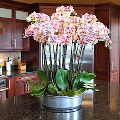 How many orchids is too many for one planter?