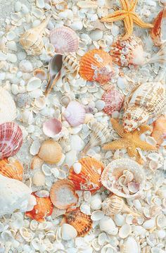 Imagem de beach, shell, and ocean