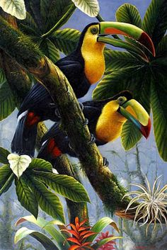 Toucans by Eddie Glass