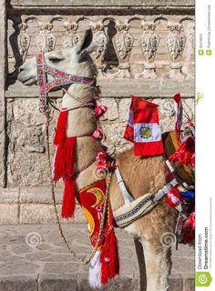 llama from peru - Google Search