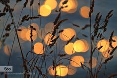 summer memories  by Carmen-Brown #nature