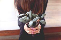 5 houseplants that clean the air
