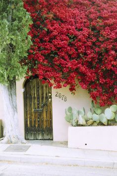 Mysterious Spanish style entry covered with bougainvillea in Los Angeles Spanish Revival, Spanish Style, Beautiful Flowers, Beautiful Places, Agaves, California Love, Garden Gates, Windows And Doors, Porches