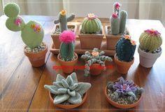 spunti e punti in libertà: Passione cactus