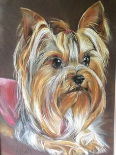 The Affectionate Yorkshire Terrier Dogs Exercise Needs I Love Dogs, Cute Dogs, Yorshire Terrier, Top Dog Breeds, Yorkies, Yorkie Puppy, Lap Dogs, Dog Paintings, Dog Portraits