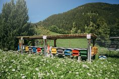 www.swissalpinehoney.com_home of one of the beekeepers I work with_Rhaetian Alps_Switzerland Honey Brand, Alps Switzerland, Take Me Over, Bee Keeping, Discovery, Lovers, World, House Styles, The World