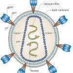 Gen Sintetik, Alternatif Baru Dalam Pengembangan Vaksin HIV