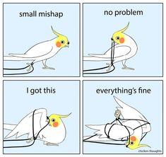 Funny Animal Memes, Funny Animal Videos, Funny Animal Pictures, Cute Funny Animals, Funny Birds, Cute Birds, Cockatiel, Budgies, Cute Memes