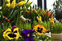 Easter decoration   #easter #tradition #polishtradition #bieszczady #ustrzykidolne #ustrzyki #colours #spring #wiosna #tulips