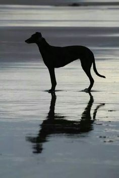 What a beautiful silhouette.