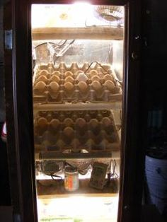4 HillsCabinet Incubator.Hello all. Hope this will help someone like all the great ideas on BYC...